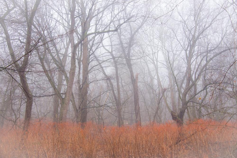 Nomahegan Fog