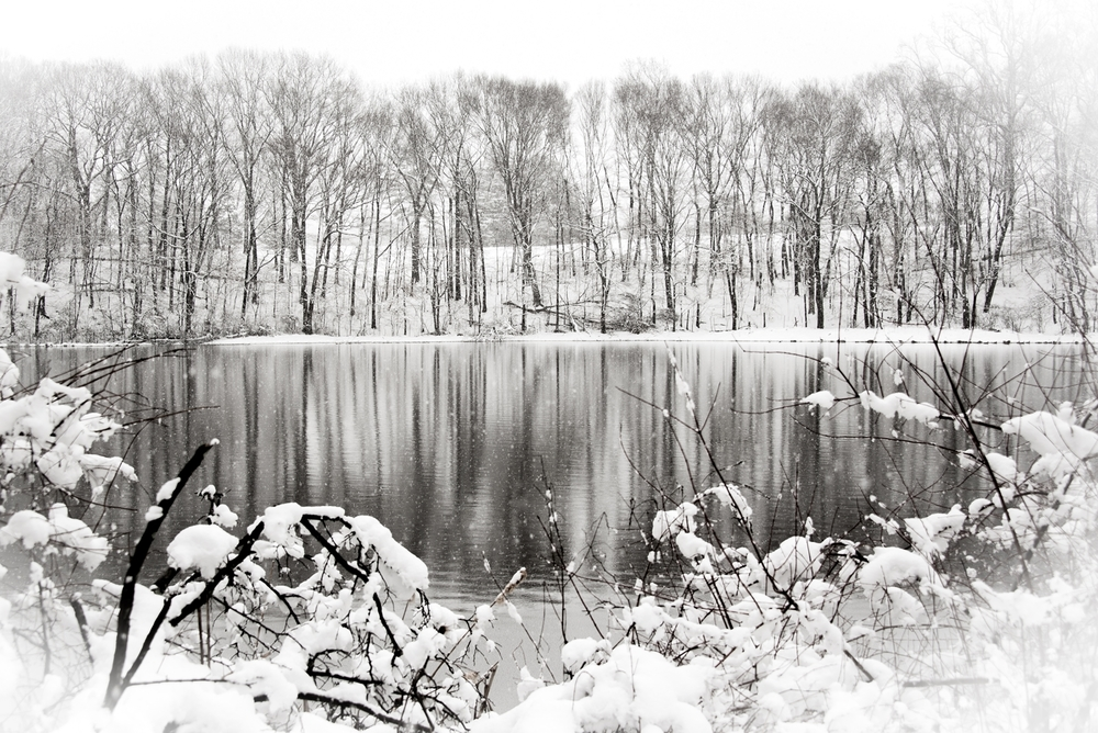 Nature-009.jpg