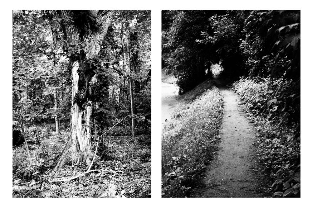 Nature-034.jpg