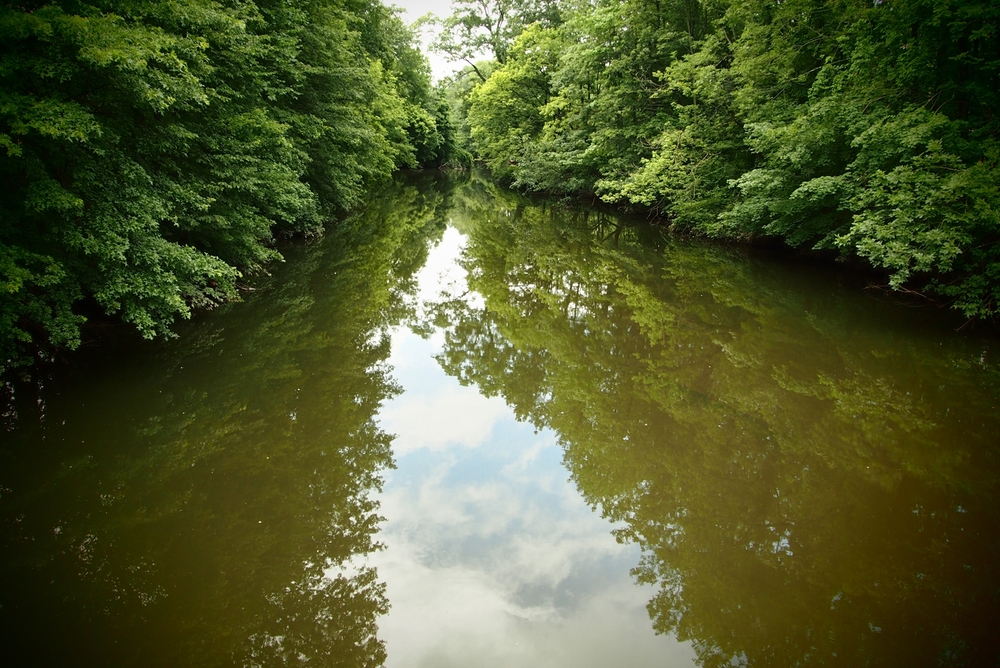 Nature-039.jpg