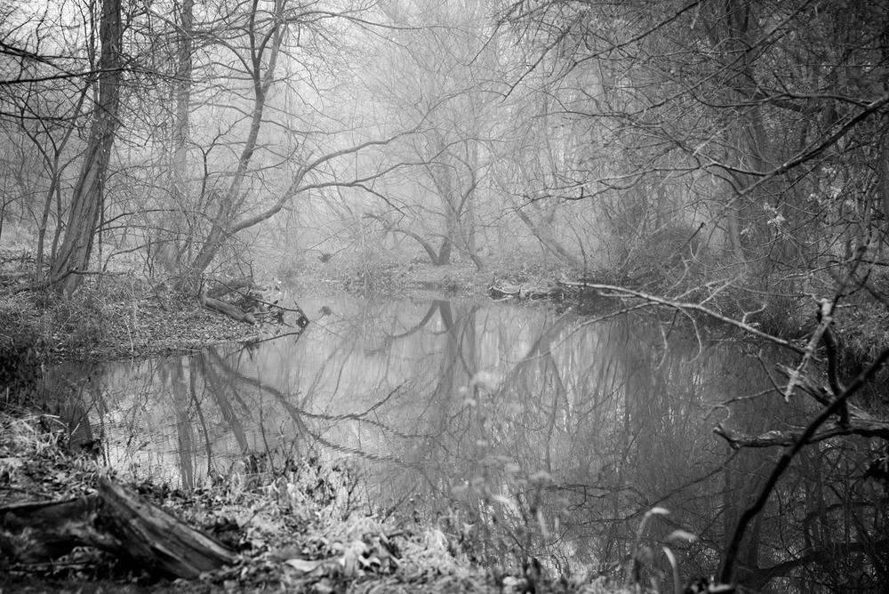 Nature-068.jpg