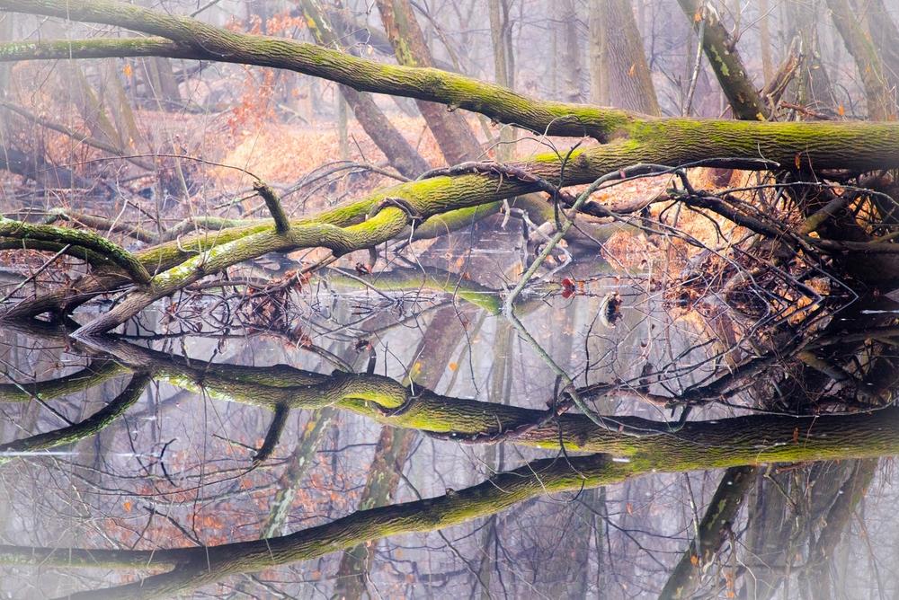 Nature-069.jpg