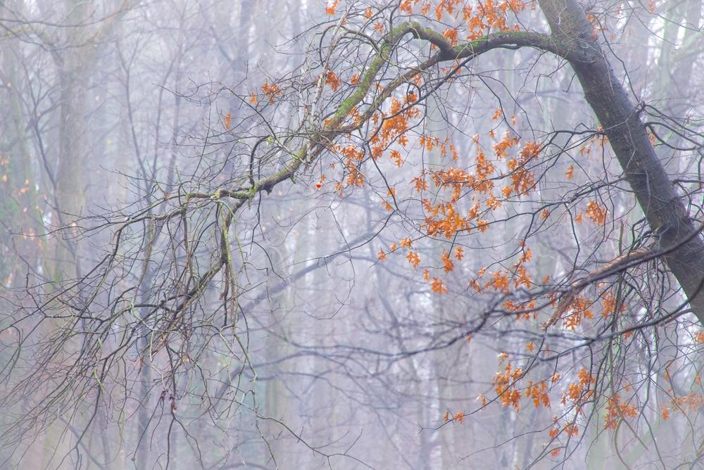 Nature-070.jpg
