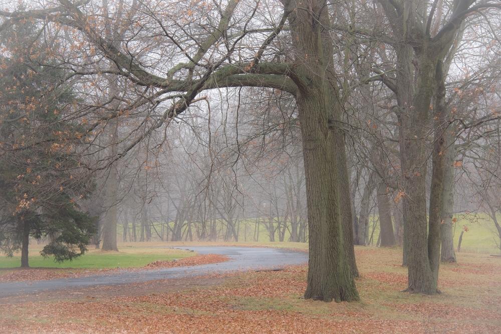 Nature-073.jpg