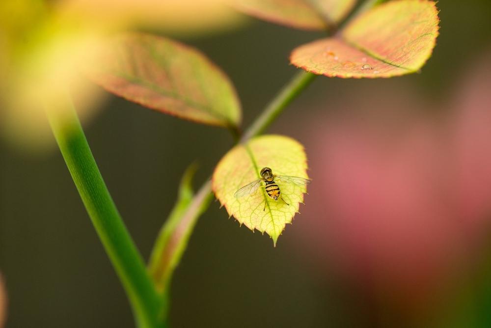 Nature-044.jpg