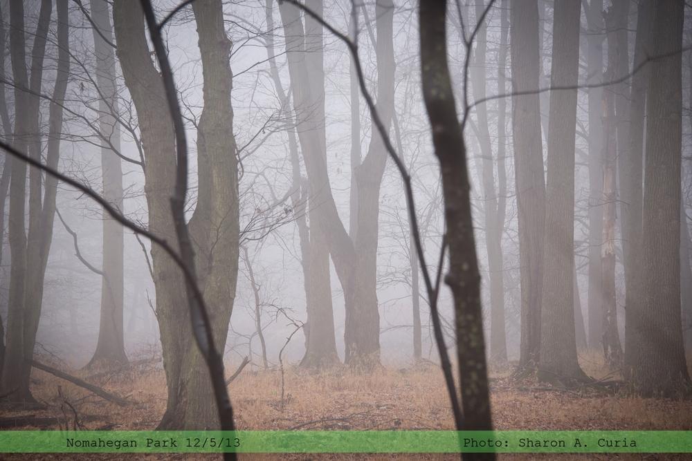 Nomahegan Fog 002 (Sheet 2).jpg