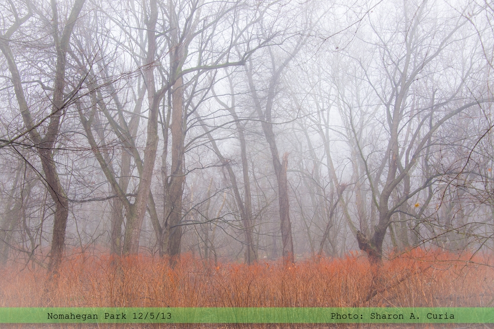Nomahegan Fog 004 (Sheet 4).jpg