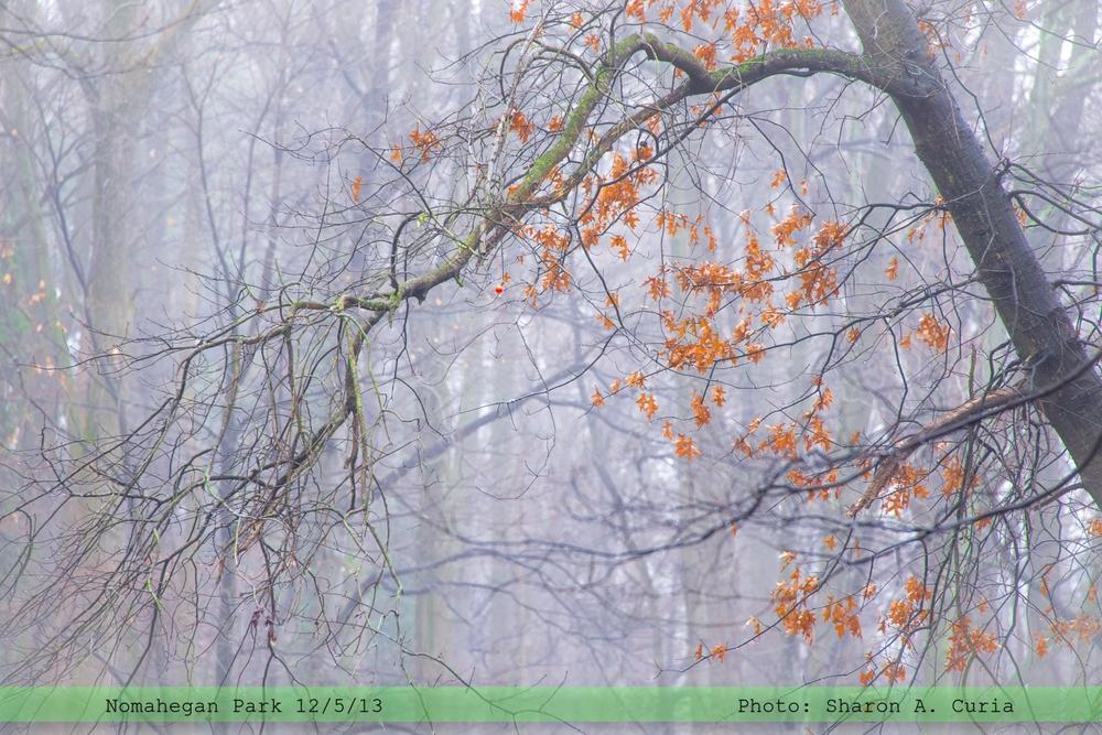 Nomahegan Fog 031 (Sheet 31).jpg