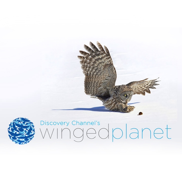 Discovery Channel // Winged Planet