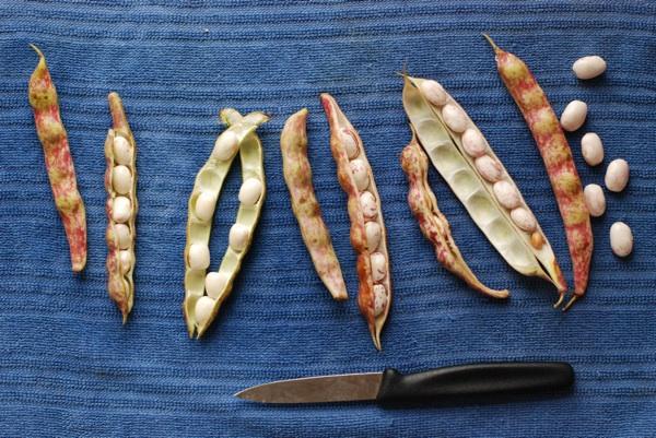 ndp beans