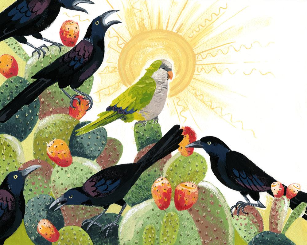 Monk Parakeet, Grackles and Prickly Pear.jpg