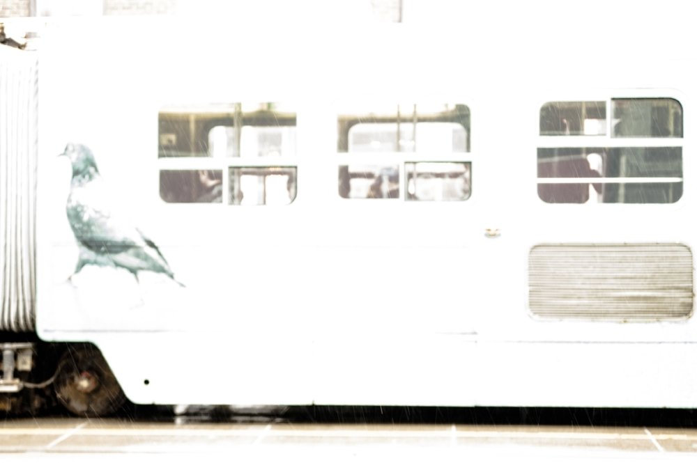 Streetcar, Light Rain (2017)