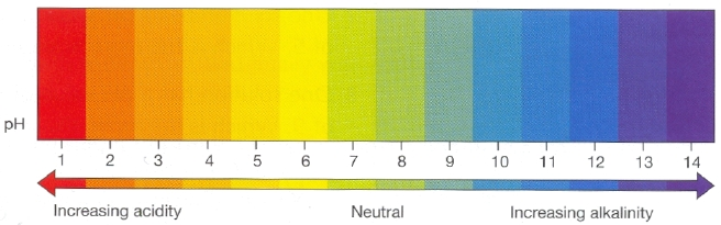 A normal pH balance in the human body falls between 7.35 and 7.45.  Acidic toxins that collect in the body cause pH to fall below 7.35, creating the perfect environment for bad things, such as fungi, bacteria, and viruses to grow unchecked. Zeologic Zeolite helps to restore pH balance by pulling out these acidic toxins out of cells and carrying them out of the body.