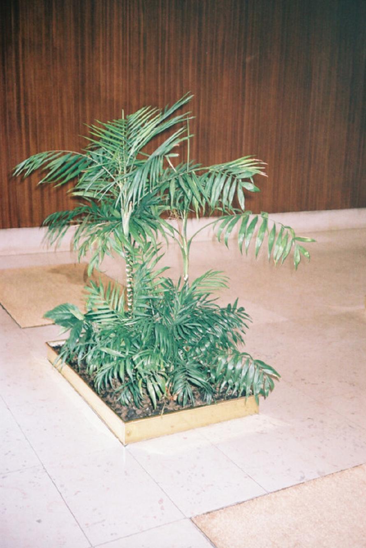 KaraThomas-Mood-PlantLife-06.png