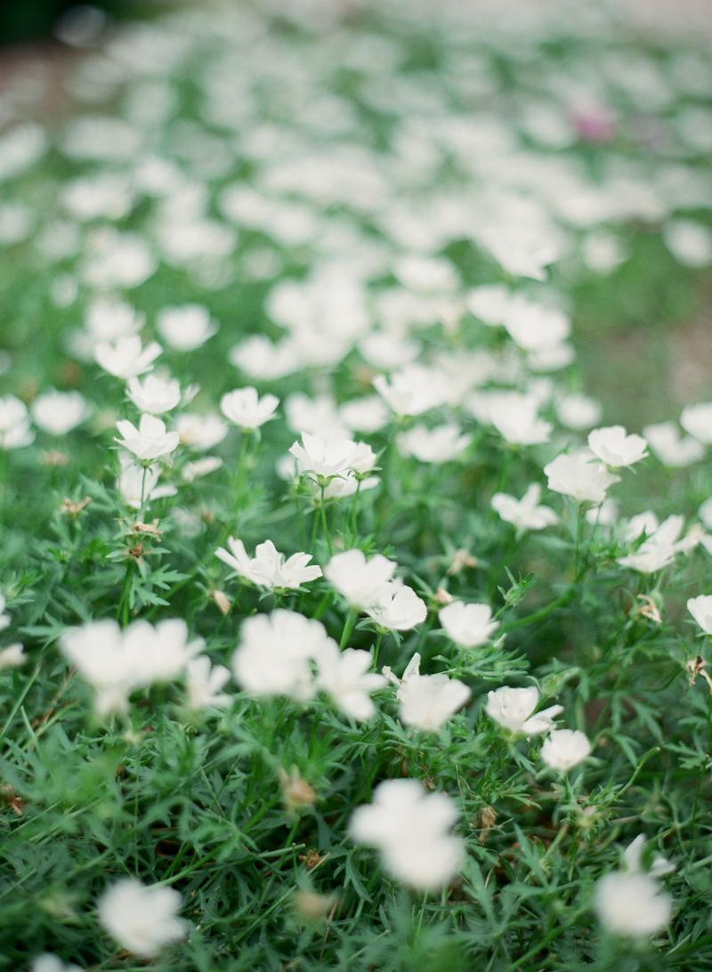 26LubbockBridalPhotographer-Arboretum-StPaulChapel-fine-art-film-engagement-bridal.jpg