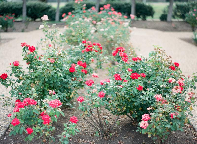 249LubbockWeddingPhotographer-Arboretum-StPaulChapel-fine-art-film-engagement-bridal.jpg