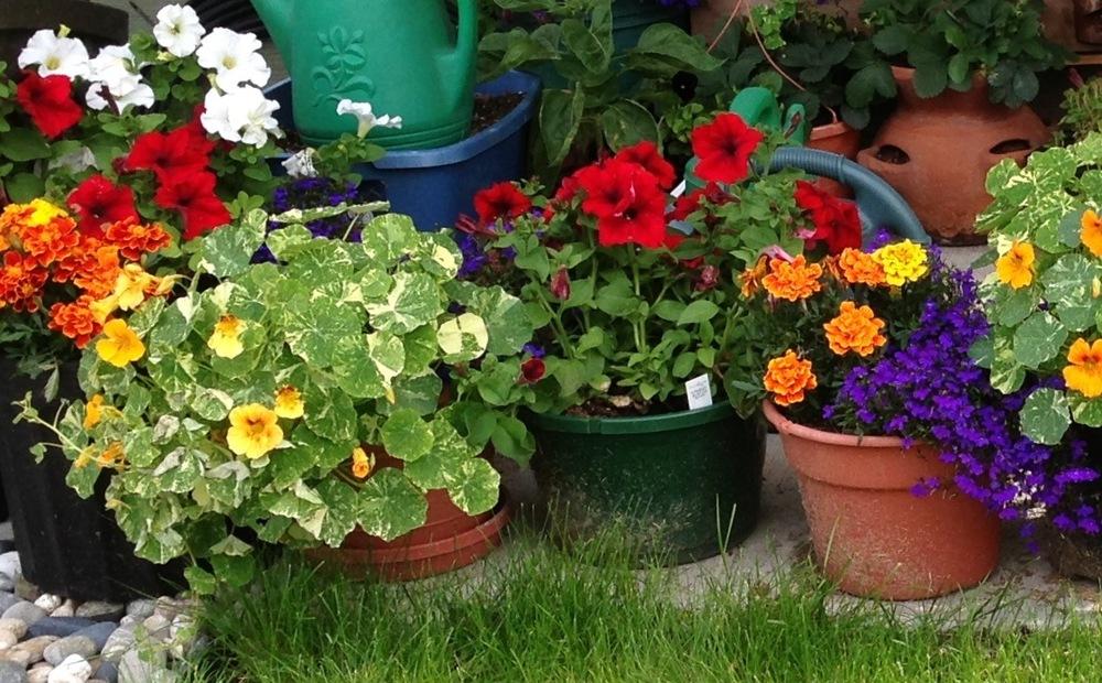 Louise's flowerpots 5x7.jpg