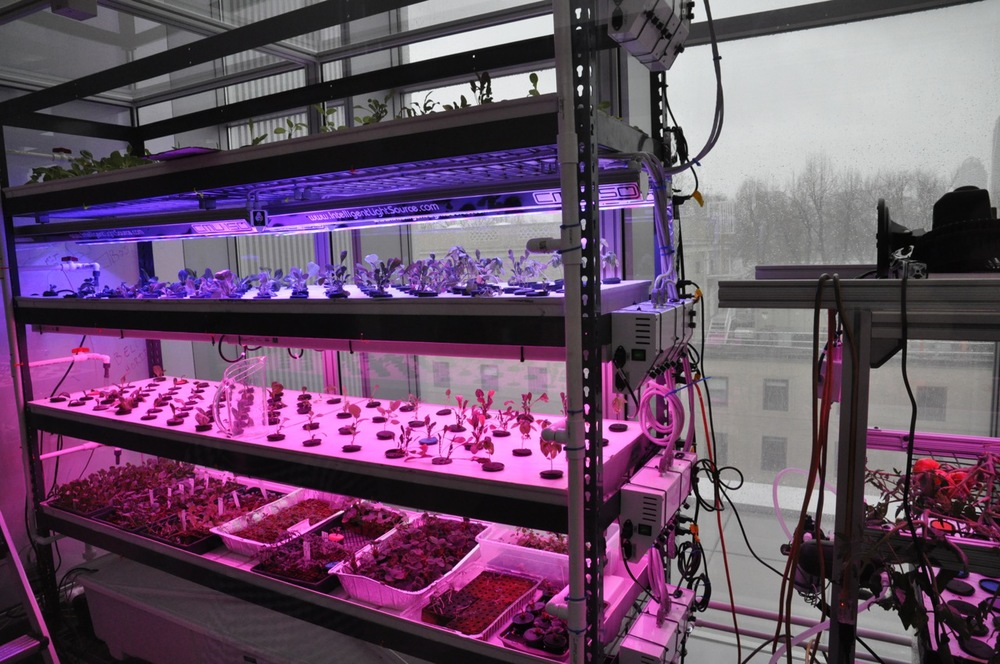 Media Lab working on growing its own food!