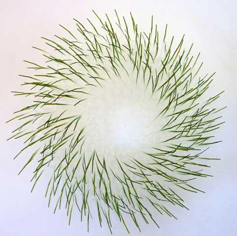 Urchin Series  45cmx45cmx17cm SOLD