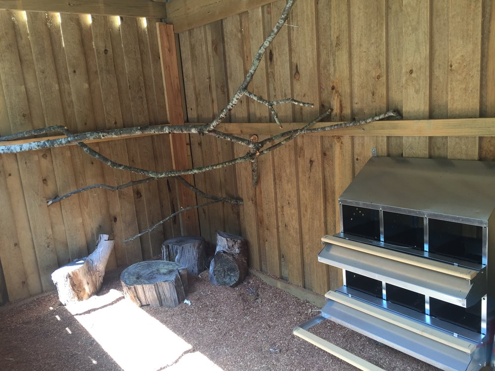 Chicken roosts and rollaway nesting boxes.