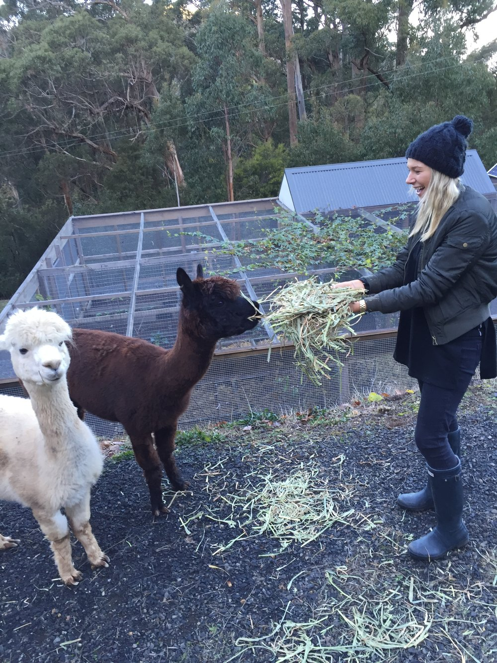 Ellen with our alpacas Kath and Kim.