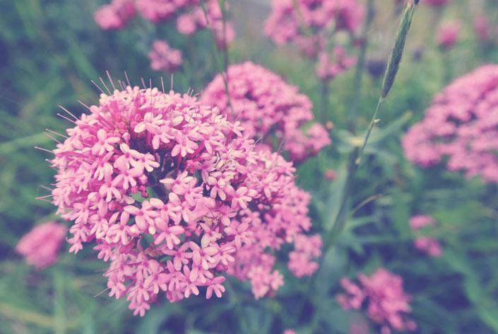 english_wildflowers_dover_aspiringkennedy.jpg