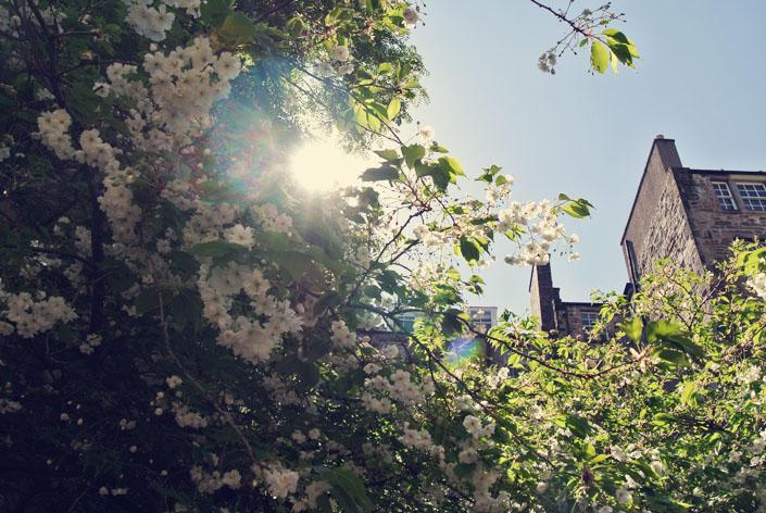 edinburgh_sunshine_aspiringkennedy.jpg