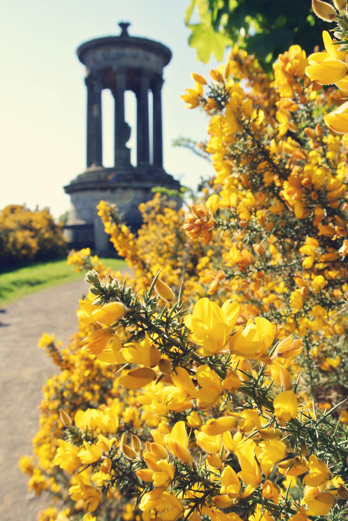 carlton_hill_scottish_flowers_aspiringkennedy_edinburgh_travel_guide.jpg