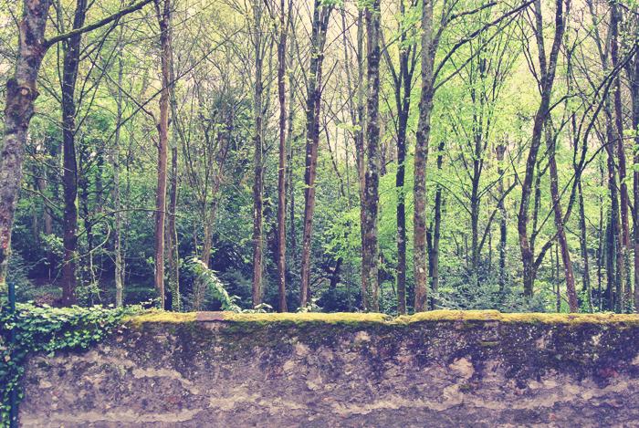 loire_valley_trees_aspiring_kennedy.jpg
