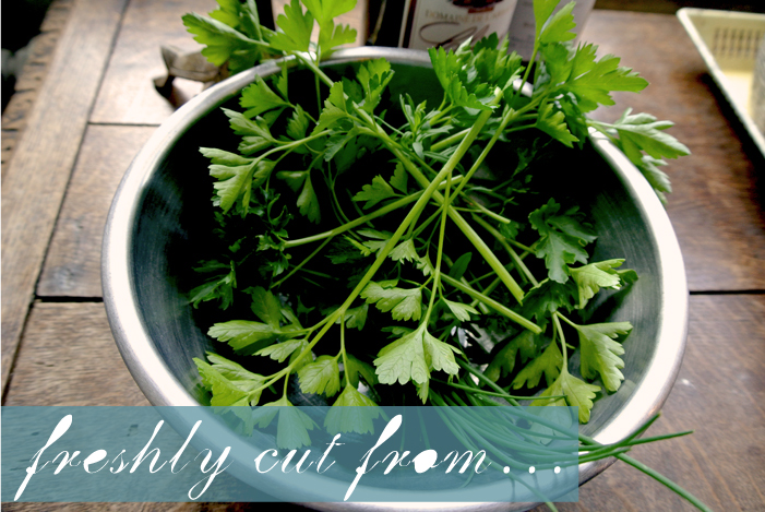 french_herbs_le_manoir_champfrau_aspiring_kennedy.jpg