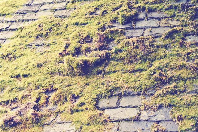 scottish_roofs_luss_scotland_aspiring_kennedy.jpg