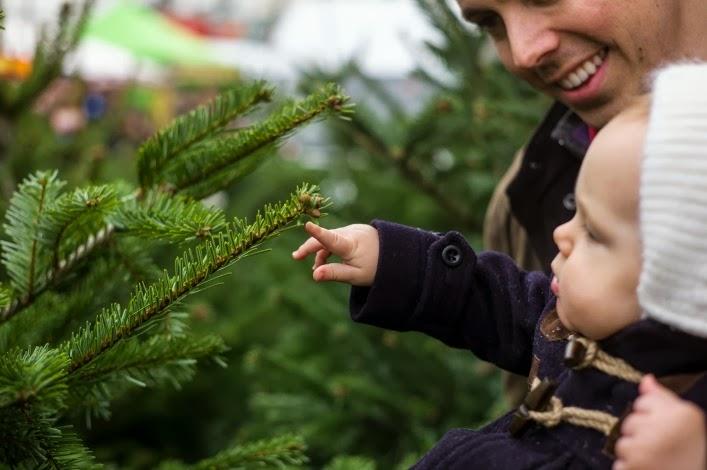 notting_hill_christmas_trees_aspiring_kennedy_noah_darnell.jpg