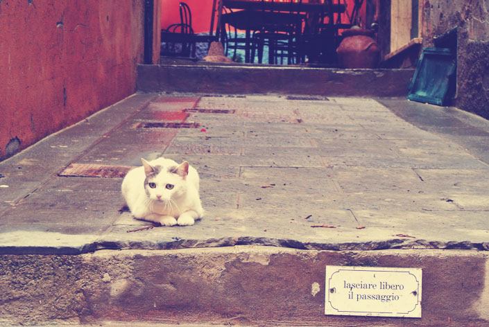 italian_cat_cinque_terre_aspiring_kennedy_2.jpg