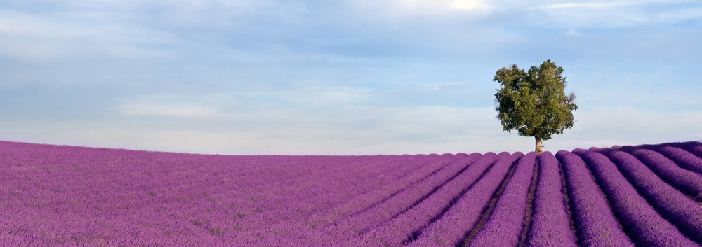 provence lavender fields aspiring kennedy