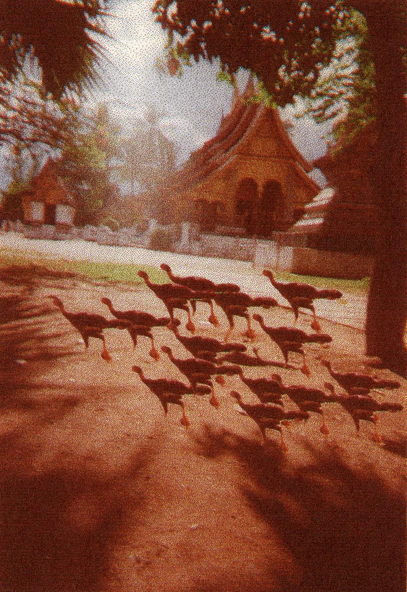 flock_39.jpg