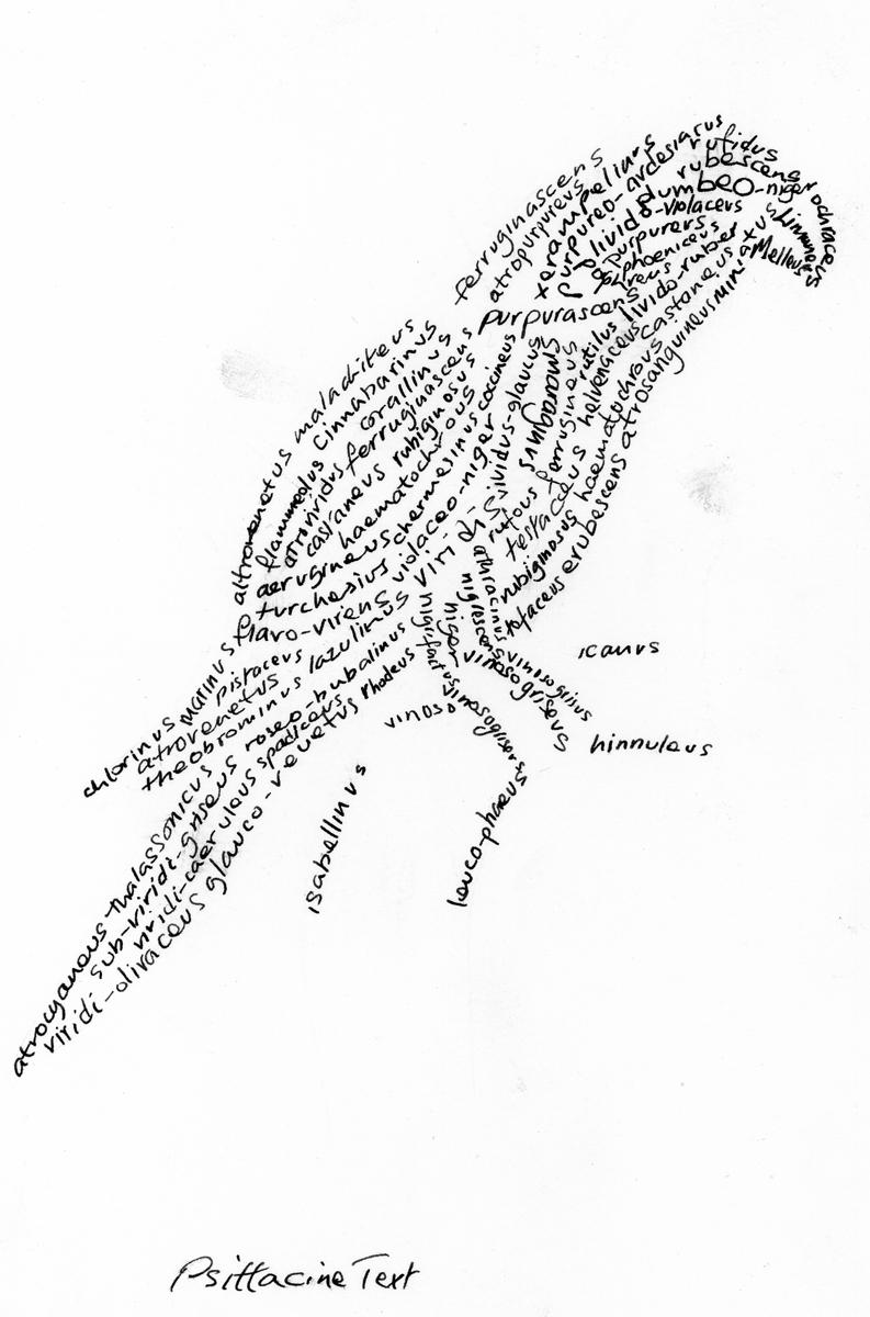 flock_49.jpg
