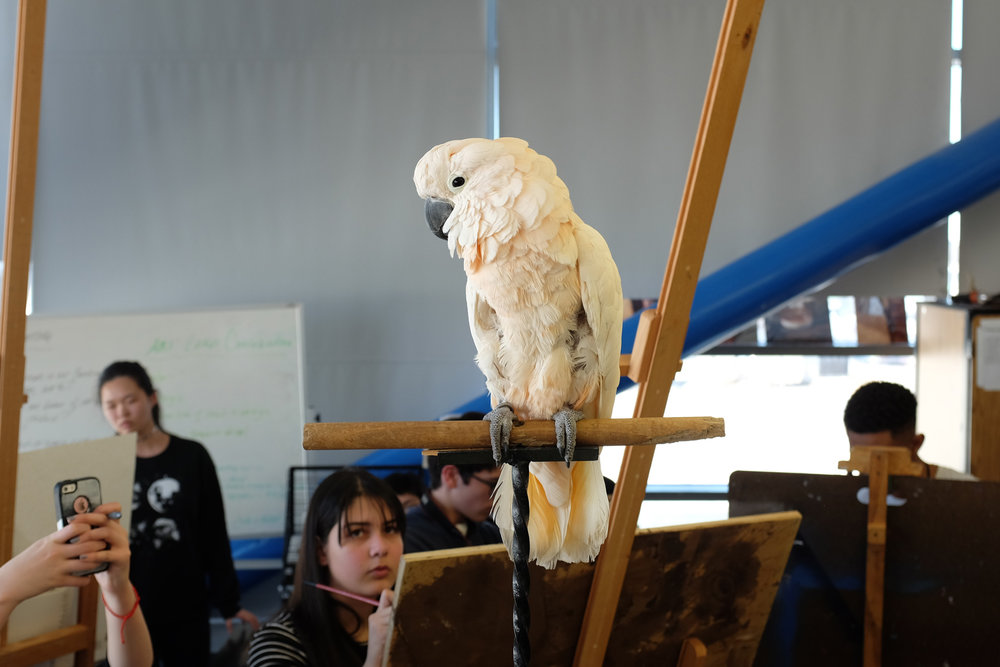 A Talking Parrot at a High School