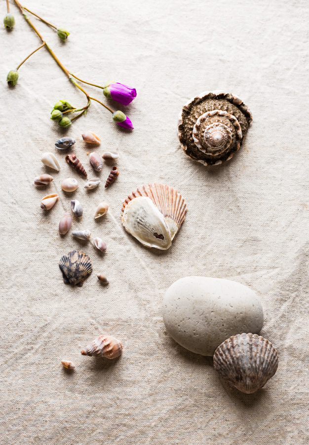Sea Shells with a Flower