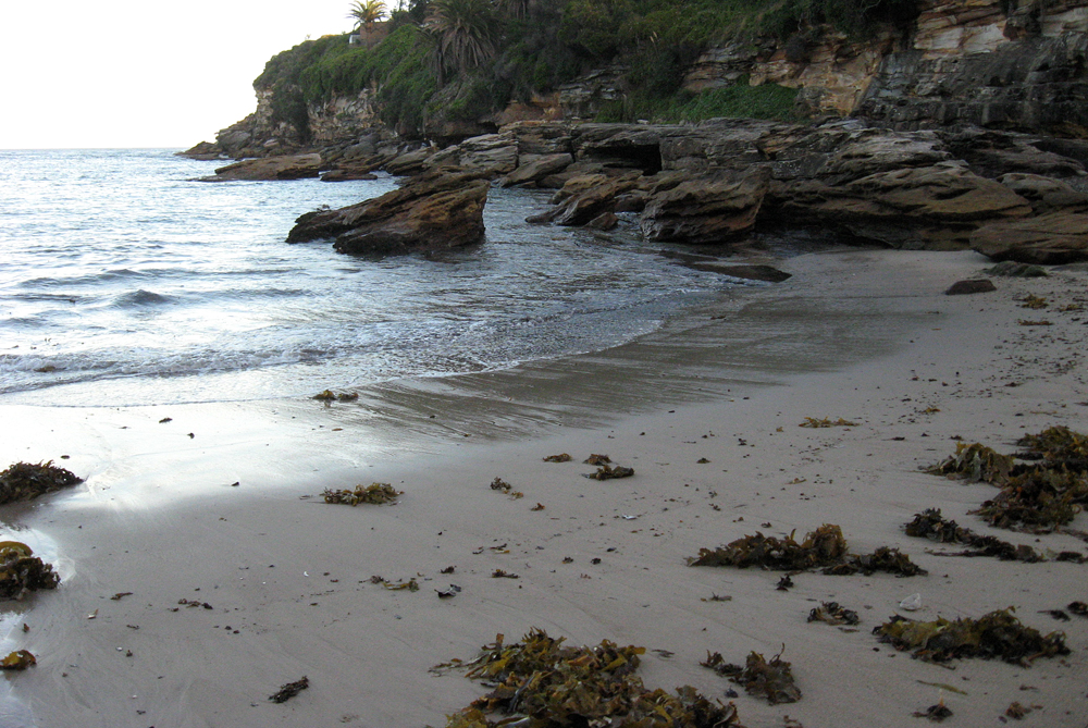 walking my own 'wrack line', Gordon's Bay, Sydney, May 2013.