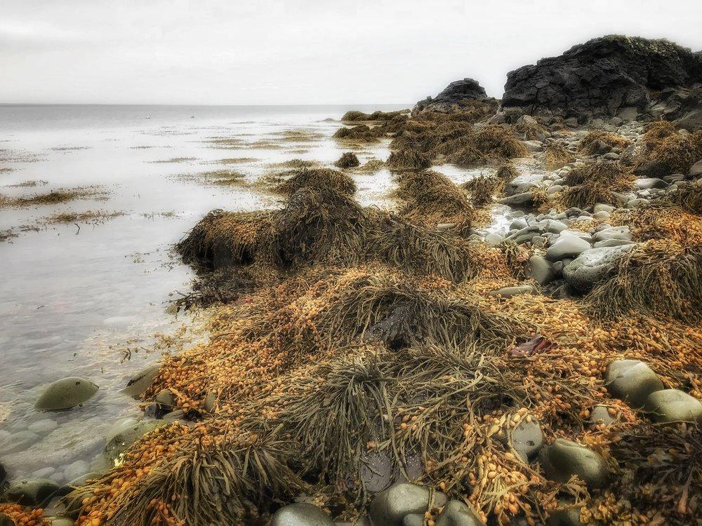 Golden Tresses - Iceland
