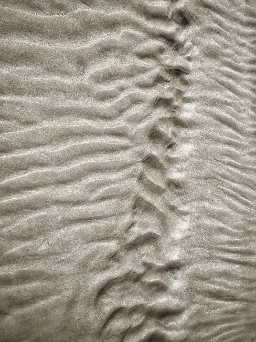 Spine In The Sand