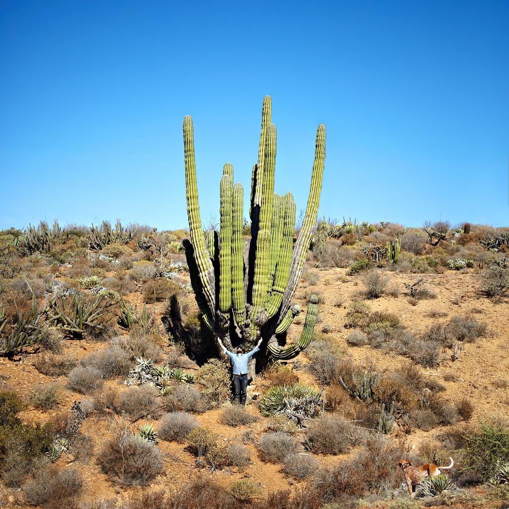 Los Cirios Cactus Theron.jpg