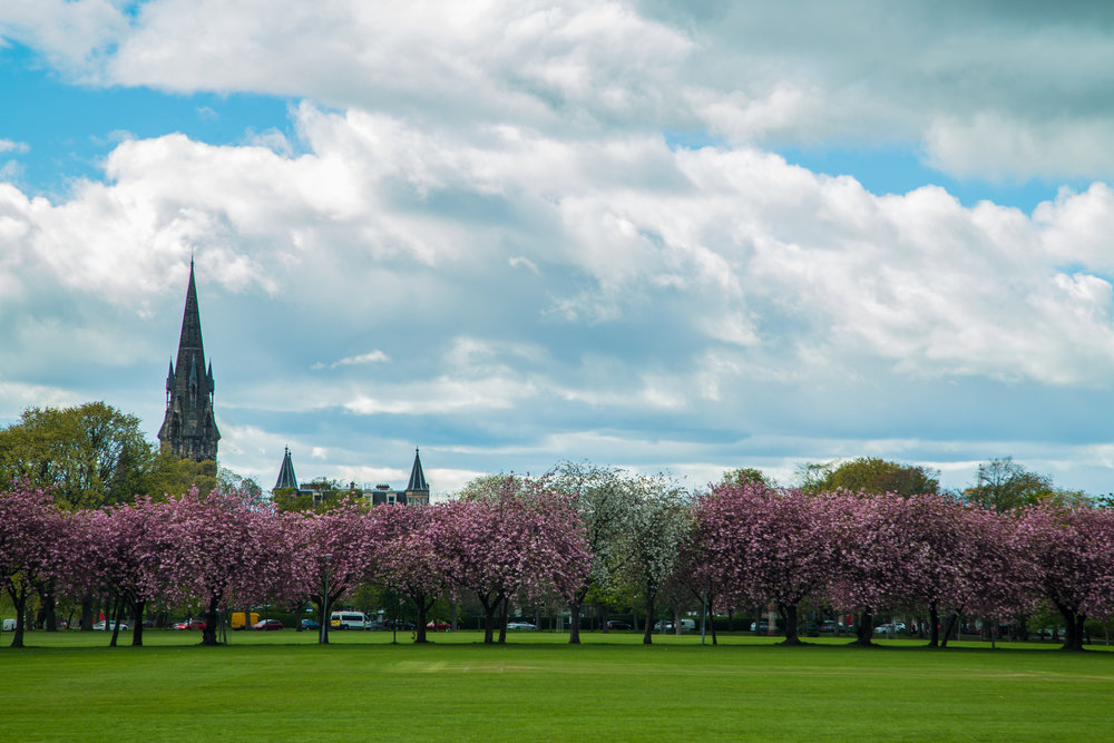 The Meadows, with Barclay Viewforth Church in background