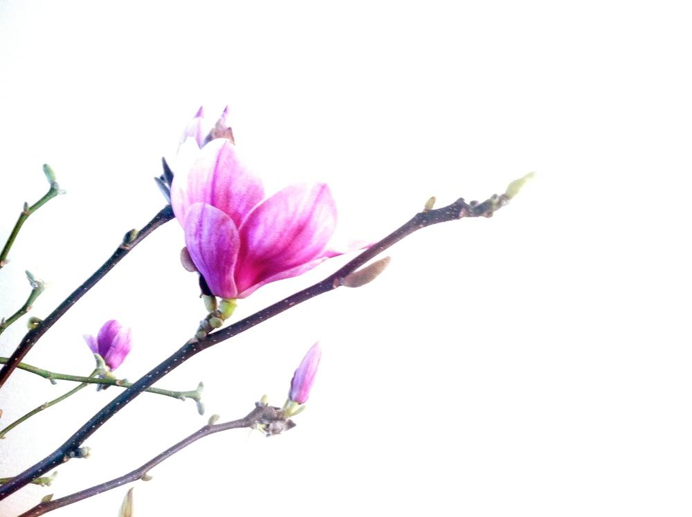 BalancingWalls_Spring2014.JPG