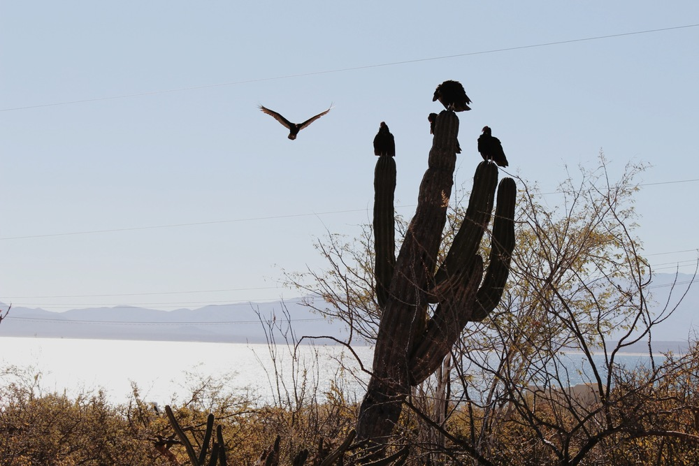 Vultures, perched near our casita