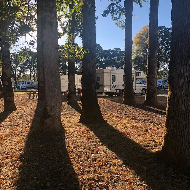 Camped under the oak trees this week. . Also, acorns falling onto your RV roof are shockingly loud. . #acornskeepfallingonmyhead #followthewind #rvlife #fulltimerv #analognomad #digitalnomad #winnebago #oregon #pnw