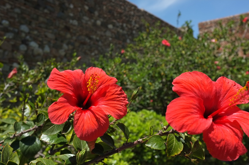 Malaga-blog-37.jpg