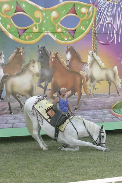 horses6.jpg