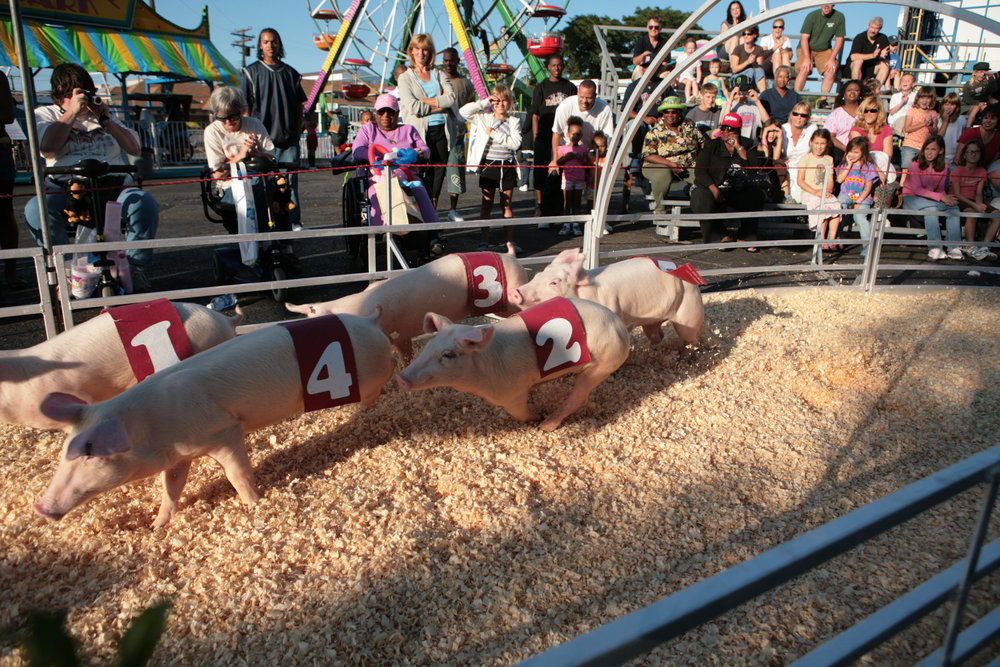 Show-Me Swine Racers - Pig Racing