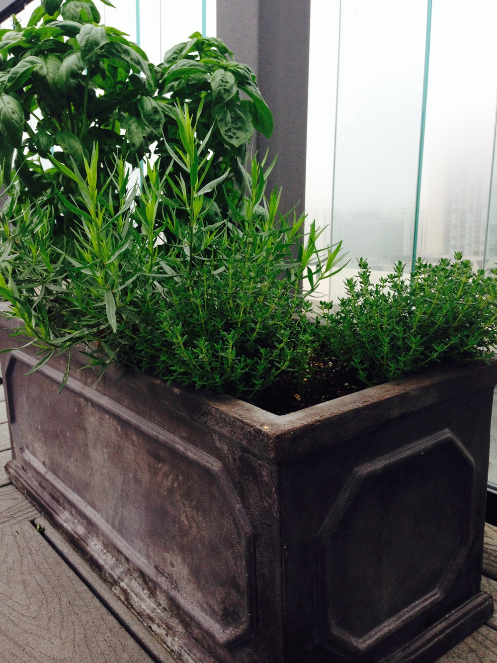 A planter of herbs is a virtually skill-free endeavor.